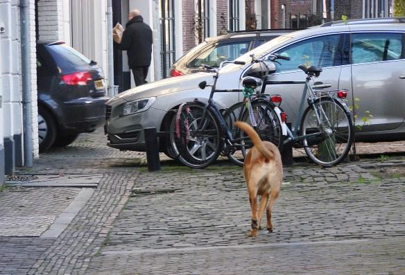 utrecht dogs