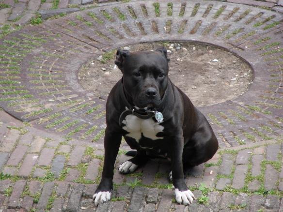 oudegracht hond
