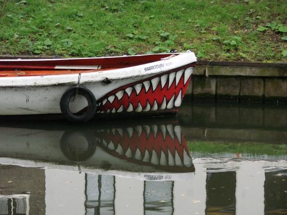 sharktours